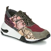 Chaussures Femme Baskets basses Steve Madden CLIFF Gris
